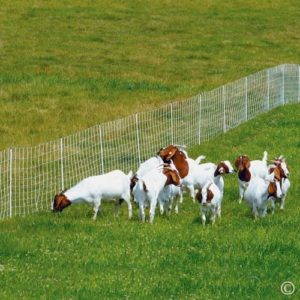 Premier-ElectroStop-Goat-Sheep-Electric-Fence-42H-x-164-L-Double-Spike-WhitePremier-Top-Seller-0